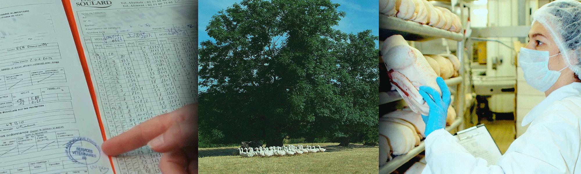 D marche qualit et engagements canard soulard - Comment cuisiner le canard entier ...